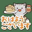 American shorthair cat 14