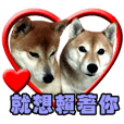 柴犬幸せ家族