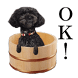 The toy poodle photo sticker 1