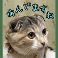三毛猫ももちゃん7 ちょっと大人な挨拶編
