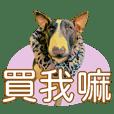 Bull terrier life EP1(CN)