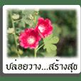 คำพูด คติเตือนใจ กับภาพดอกไม้สวยๆ