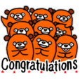 Daily Orange bear