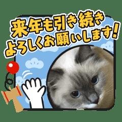 可愛い猫とインコのスタンプ
