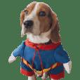 Beagle Dog Cooper