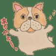 french bulldog. sticker