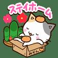 お茶目な三毛猫【お正月&体調気遣い】
