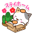 Cute Calico cat 20