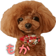 toy poodle moka sticker vol.1