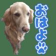 RU様の愛犬のスタンプ