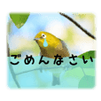 Japanese white eye(wild bird sticker 1)
