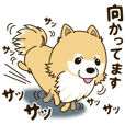 A sticker willingly. Pomeranian Act