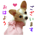 Real DOG Pretty -NOA-