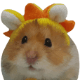 Golden Hamster~MoMoJai~ 2