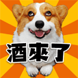 cute corgi is coming