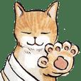 Chunibyo Cats