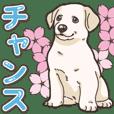 Wanko-biyori puppy Labrador retriever 5