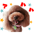 Real DOG Toy Poodle No.4