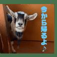 mugiwahei_20210103191305