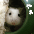 "Hamsters ""MAME"""