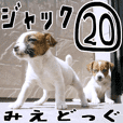 MIEDOG Jack Russell terrier sticker 20