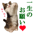 This is a cat photo sticker.