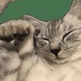 a day in a cat