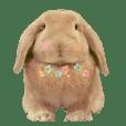 Bunny Hollandlop Daichan Japanese Ver.