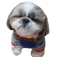 Shih tzu friend's sticker