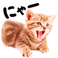 Cat Photo Stickers 07