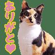 TO様の猫ちゃんスタンプ vol.1