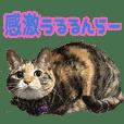 TO様の猫ちゃんスタンプ vol.2
