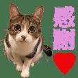 TO様の猫ちゃんのスタンプvol.3