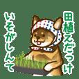 Niigata dialect speaking shibainu 3