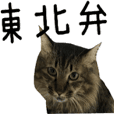 cat of cure TOHOKU dialect