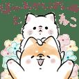 Shiba Inu Dog & Cat
