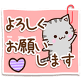 American shorthair cat 16