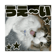 Cool cats photo stickers! (jp)