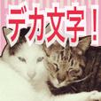 【デカ文字】表情豊かな猫ちゃん達。2