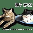 貓姐的喵寶-熊公主&浣少爺