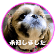 Shih tzu photo sticker 2