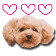 Love!!Poodle!!2
