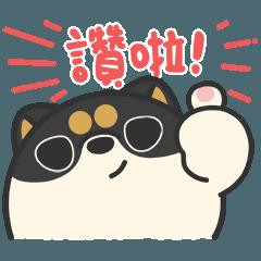 米犬日常 黑柴歐巴