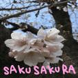 sakusakura
