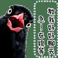 野鳥好朋友 台灣藍鵲好好聊天