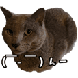 cat's Mugi-chan!