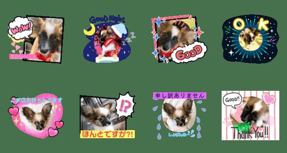 「【シュシュ看板犬スタンプ】あんじゅ」のLINEスタンプ一覧