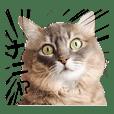 おしゃべり猫ちゃん「ビビ」&「タロ」