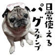 Pug sticker.Sutesan From JAPAN.