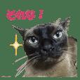 Toro's Live action Sticker